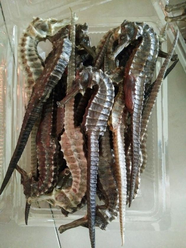 dried seahorse for sale